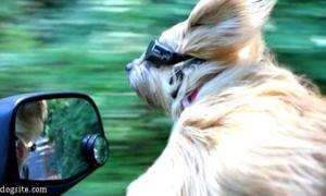 Kính và phong cách của... chó