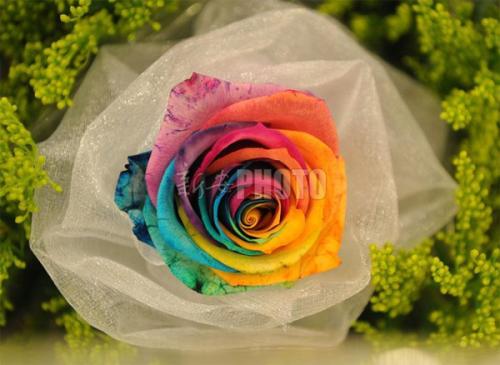 love-12-492226-1371464481_500x0.jpg