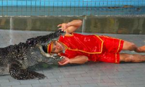 Đầu người gọn lỏn trong miệng cá sấu