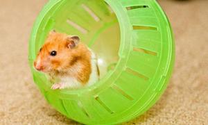 Kinh ngạc chuột đào mồ sống lại