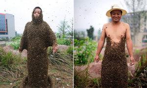 Anh chàng thu hút 300.000 chú ong bậu trên người