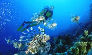 Sinh vật biển 86 triệu năm không cần ăn uống