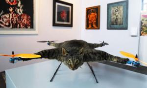 'Ngất tại chỗ' trước máy bay đồ chơi xác mèo
