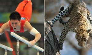 Sự giống nhau kỳ lạ giữa thể thao và động vật