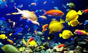 10 điều về đại dương một năm trước