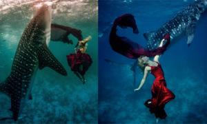 Các chân dài chụp ảnh gợi cảm bên cá mập khủng