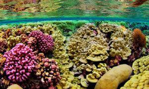 Đại dương cũng thật nhiều màu sắc