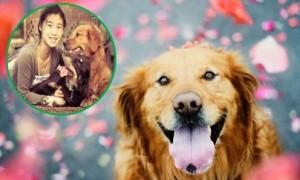 Ảnh tưởng nhớ cún yêu đẹp lung linh của cô bạn gốc Việt