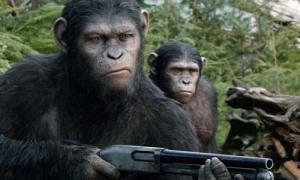 Phim doanh thu 500 triệu đô về loài khỉ ra tiếp phần 2