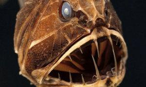 Những quái vật xấu 'ma chê quỷ hờn' của đại dương
