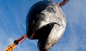 Loạt ảnh tố cáo tội ác của con người với đại dương