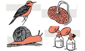 Những cách làm đẹp kỳ lạ nhất của tạo hóa