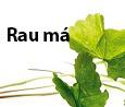 rau-ma-9360-1412697130.jpg