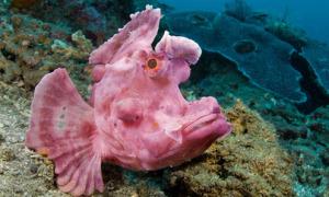 Những loài sinh vật kỳ lạ dưới đáy đại dương