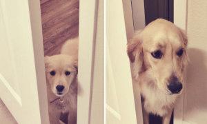 Ảnh ngày ấy - bây giờ siêu dễ thương của cún cưng