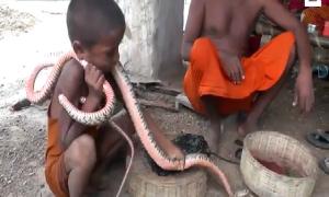 Trẻ em Ấn Độ ôm hôn, vuốt ve rắn hổ mang như đồ chơi