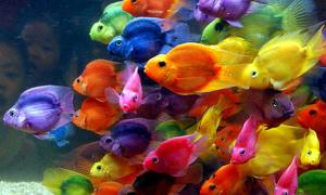 Màu sắc vui vẻ trong cuộc sống của bạn là gì