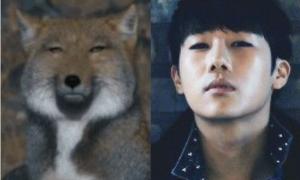 4 mỹ nam Kpop sở hữu gương mặt như loài cáo
