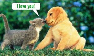 Trong tình yêu, bạn là mèo kiêu ngạo hay cún trung thành