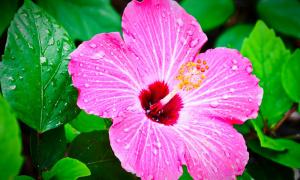 Trắc nghiệm: Bông hoa nhiệt đới hé lộ tính cách thực sự của bạn