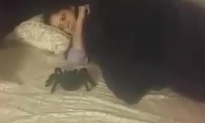 Loạt biểu cảm khóc thét khi bị troll với nhện
