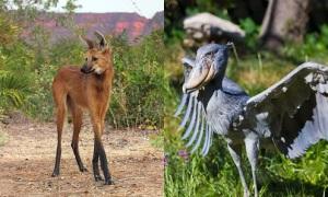 Bạn có nhận ra 10 con vật này?