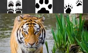 Bạn có thể xác định con vật qua dấu chân?