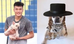 Chú cún được Bùi Tiến Dũng cưng nựng hơn cả người yêu