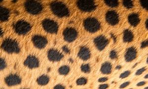 Đoán con vật từ hình ảnh phóng đại