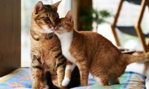 Bạn biết gì về loài mèo?