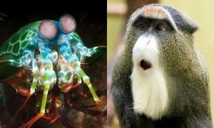 Những con vật này có thực không hay là photoshop?