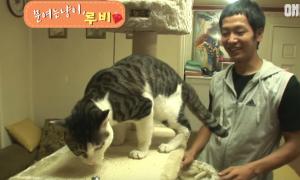 Người xem kinh ngạc với con mèo biết tự mở cửa đi chơi