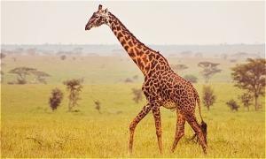 Muốn được ngắm các con vật này, bạn phải tìm chúng ở đâu?