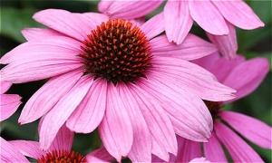 Các loài thực vật này có tên tiếng Anh là gì? (2)