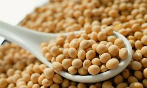 Đậu nành - nguyên liệu tạo nên nhiều thức uống được ưa chuộng