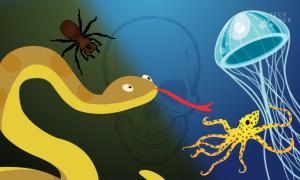 4 loài động vật nhỏ bé mà nguy hiểm nhất hành tinh