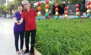 Người Sài Gòn thích thú với ruộng lúa trên phố đi bộ Nguyễn Huệ