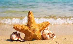 Sao biển có thể chết vì những bức hình check-in 'sống ảo'