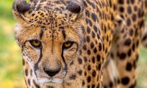 Những điều lý thú về động vật bạn đã biết chưa?