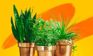 Bạn có giỏi về kiến thức thực vật?