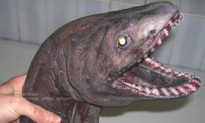 Những sinh vật kỳ bí dưới đại dương
