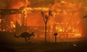 Gần nửa tỷ động vật chết vì cháy rừng ở Australia