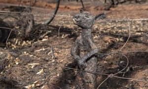 Những bức hình bi thảm về cháy rừng ở Australia