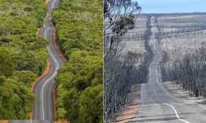 Australia trước và sau thảm họa cháy rừng