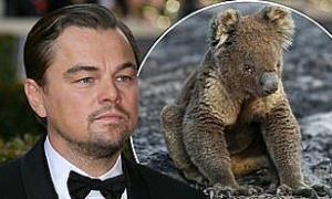 Leonardo DiCaprio thành lập quỹ 3 triệu USD cho Australia