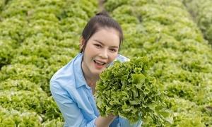 Lý Nhã Kỳ thu hoạch nông sản