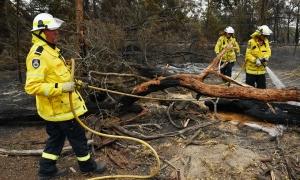 Mưa lớn giúp dập cháy rừng Australia