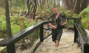 Koala chạy lũ sau thảm họa cháy rừng Australia