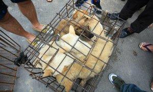 Thâm Quyến đề xuất cấm ăn thịt chó thời dịch nCoV