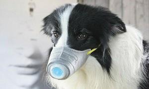 Hong Kong phát hiện nCoV trên chó